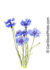 cornflowers, 花