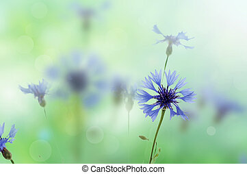 Cornflowers background - Bouquet of cornflower flowers with...