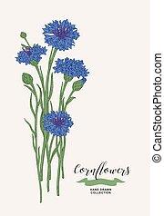 Cornflowers bouquet. Wild flowers set. Rustic design. Hand drawn vector illustration.