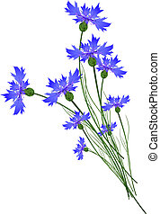 Cornflowers - Blue Cornflower Bouquet Over White Background