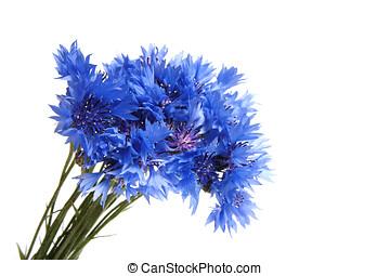 cornflowers, grupo