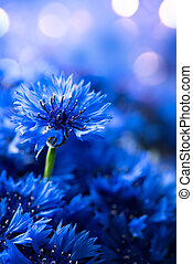 Cornflowers. Wild Blue Flowers Blooming. Border Art Design background. Closeup Image. Soft Focus