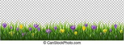 cornice, erba, fiori, fondo, trasparente