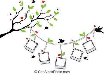 cornici, foto, albero, uccelli