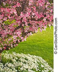 cornouiller, dans, printemps