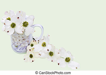 cornouiller, fleurs