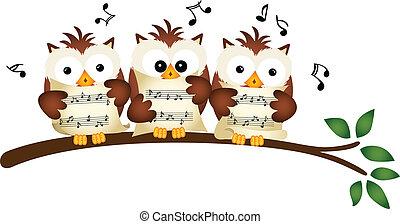 coro, corujas, cantando, três