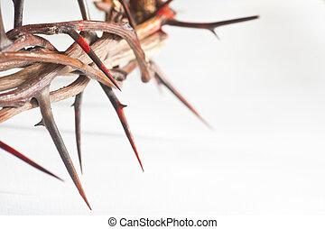 corona de espinas, en, un, fondo blanco