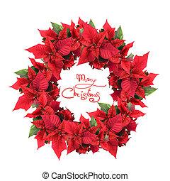 corona de navidad, de, flor de nochebuena
