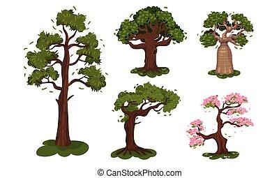 corona, exuberante, árboles, árbol, conjunto, vector, caduco