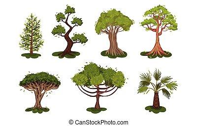 corona, exuberante, árboles, árbol, conjunto, vector, caduco...