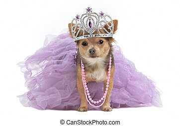 corona real, perro