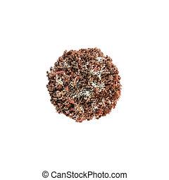 corona virus isolated on white