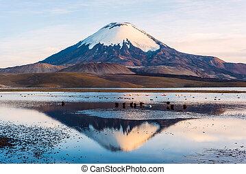 coronado de nieve, parinacota, volcán, reflejado adentro, lago, chungara, chile
