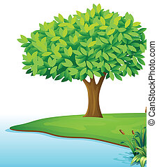 corpo, acqua, albero