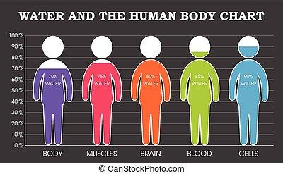 corpo, acqua, grafico, umano
