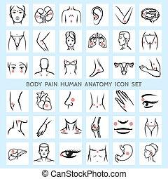 corpo, anatomia, dolore, umano, icone