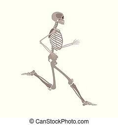 corpo, appartamento, scheletro, isolato, fondo., correndo, vettore, umano, bianco