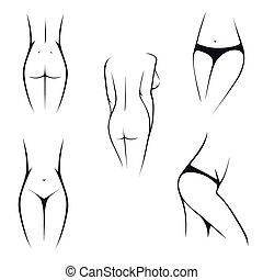 corpo feminino, partes, íntimo
