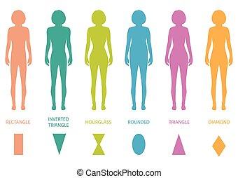 corpo feminino, tipos
