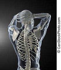 corpo humano, varredura médica, vista traseira