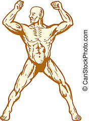 corpo, maschio, costruttore, anatomia, flessione, muscolo umano