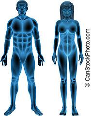 corpo, maschio, femmina, umano