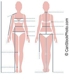 corpo, misurazione, piena figura, illustrazione, lunghezza,...
