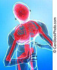 corpo, raggi x, umano, vista