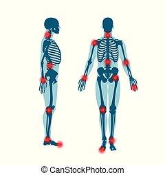corpo, scheletro, umano, uomini, illustrazione, silhouette., anatomia, fondo, fronte, bianco, vista., lato
