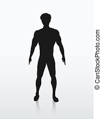 corpo, silhouette, umano, illustrazione