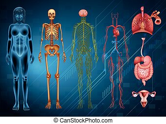 corpo, sistemi, umano