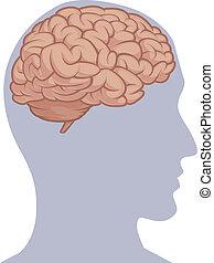 corpo, testa, dentro, -, cervello, parte, umano
