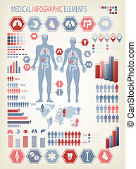 corpo, umano, elements., organs., medico, interno, vector., ...
