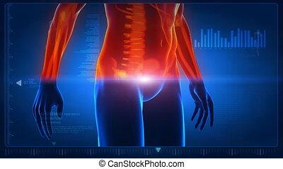 corpo umano, scansione, parte, 2