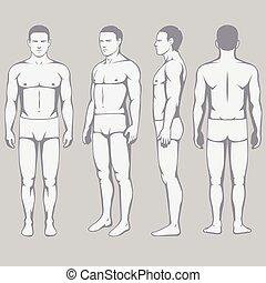 corporal, anatomia, costas, vetorial, frente, lado, homem