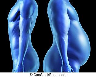 corporal, comparação, forma, human