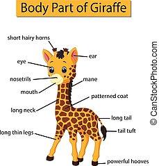 corporal, diagrama, mostrando, girafa, parte