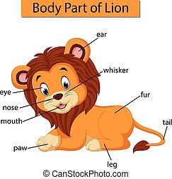 corporal, diagrama, mostrando, parte, leão