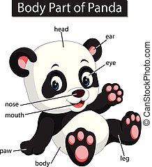 corporal, diagrama, mostrando, parte, panda