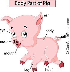 corporal, diagrama, mostrando, parte, porca