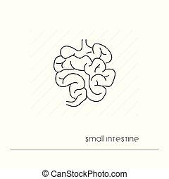 corporal, digestão, intestino, esboço, pictograma, isolated., símbolo, anatomia, system., único, magra, human, pequeno, linha, ícone