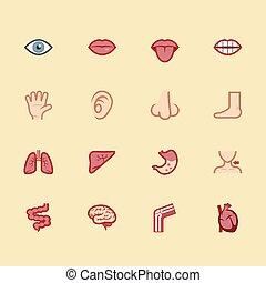corporal, elemento, vetorial, cor, ícone, jogo, 1
