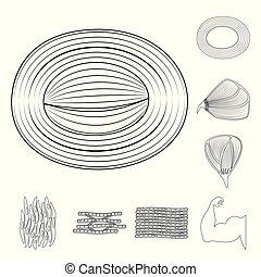 corporal, fibra, símbolo, web., muscular, jogo, vetorial, ilustração, icon., estoque