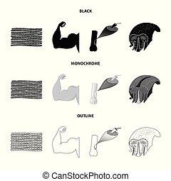 corporal, fibra, stock., símbolo., muscular, vetorial, desenho, cobrança, ícone
