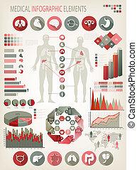 corporal, human, elements., organs., médico, interno, vector...