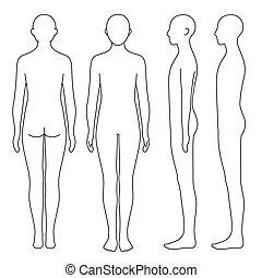 corporal, human, esboço, lado, costas, frente