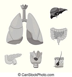 corporal, illustration., médico, objeto, isolado, cobrança, símbolo., vetorial, human, estoque