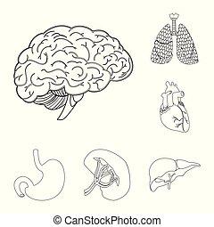 corporal, illustration., médico, símbolo., cobrança, vetorial, desenho, human, estoque