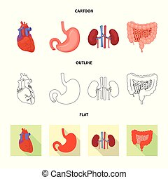 corporal, illustration., médico, símbolo., ilustração, vetorial, cobrança, human, estoque